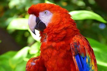 COSTA RICA VOLCAN, MONTAÑA Y PLAYA