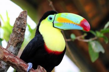 COSTA RICA ESENCIAL